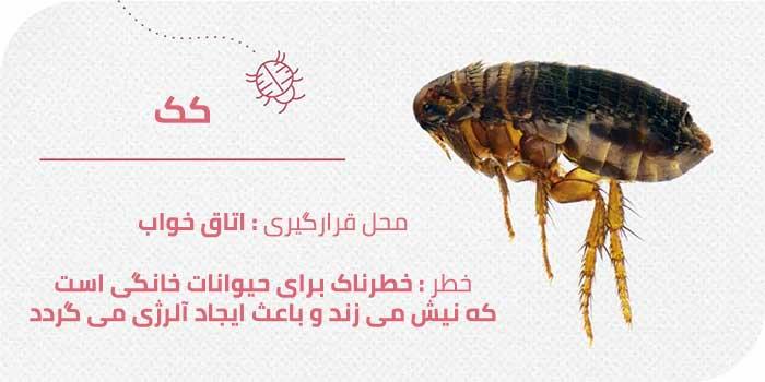 حشرات موذی منزل : کک