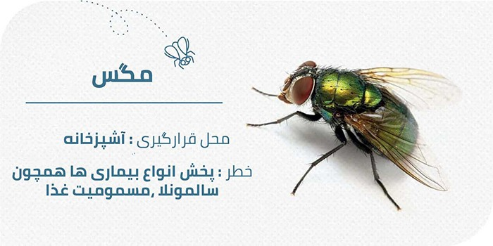 حشرات موذی منزل : مگس