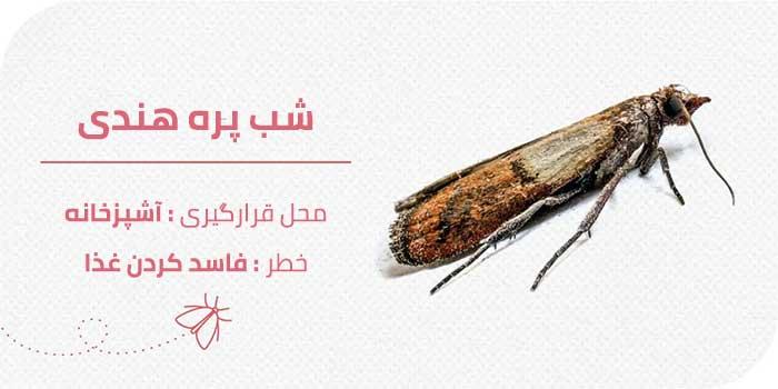 حشرات موذی منزل : شب پره هندی