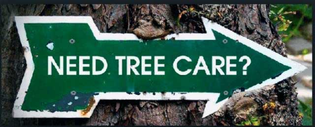 خدمات باغبانی درختان