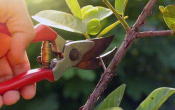 باغبانیهرس درختان میوه